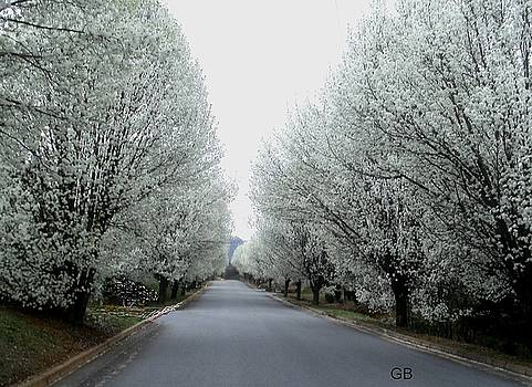 Pear Trees by Glenda Barrett