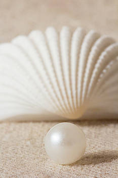 Pearl and Shell by Eleanor Caputo