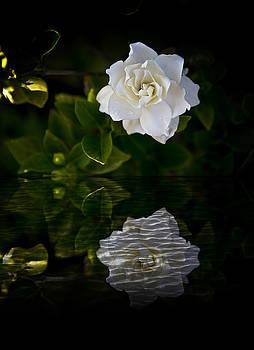 Regina Williams - Pearl White