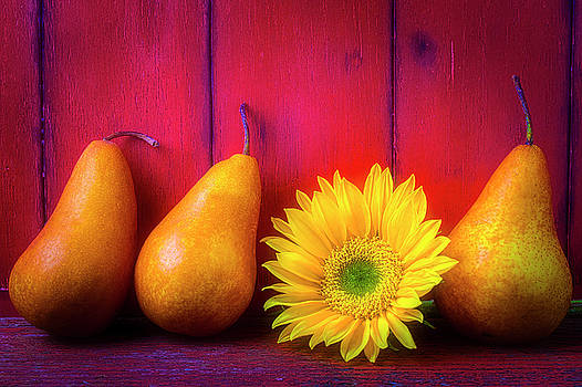 Pears And Sunflower by Garry Gay