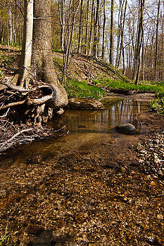 Pebble Stream by James Reed