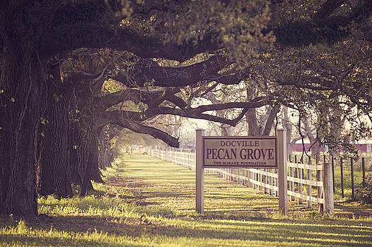 Pecan Grove  by Alicia Morales