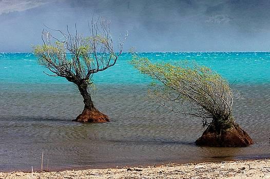 Peculiar Trees by Sarah Lilja