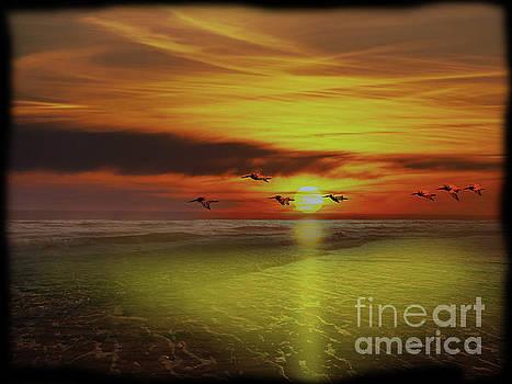 Pedasi Panama Pelicans Soar Into The Sunset by Al Bourassa