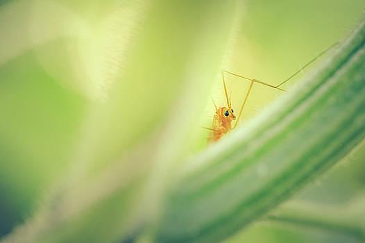 Peek A Boo Bug by Debi Bishop