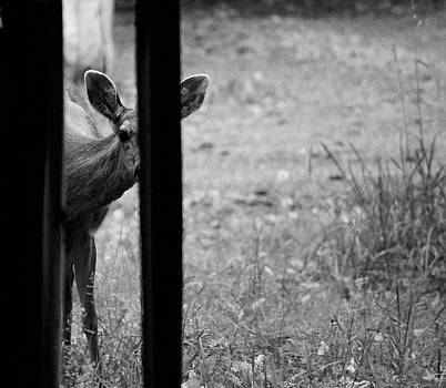 Peek A Boo I can see you by Kym Backland