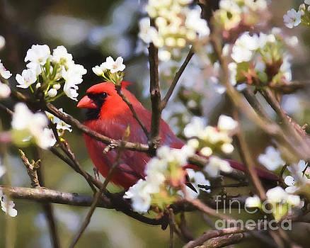 Peek A Boo In The Blossoms by Kerri Farley