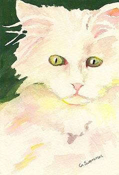 Peek-A-Boo Kitty by C L Swanner