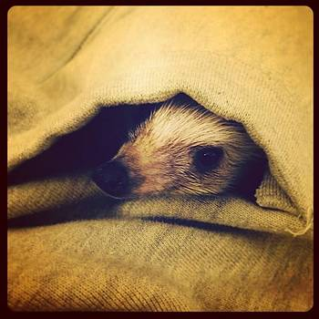Peekaboo! 🙈 #hedgehog #cutiepie by Emily Botelho