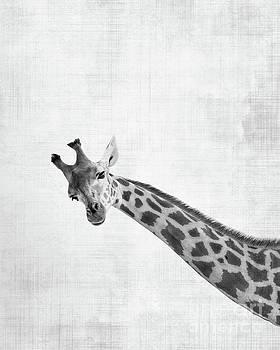 Delphimages Photo Creations - Peekaboo giraffe