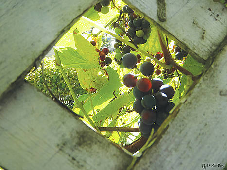 Peeking at Grapes by Celtic Artist Angela Dawn MacKay