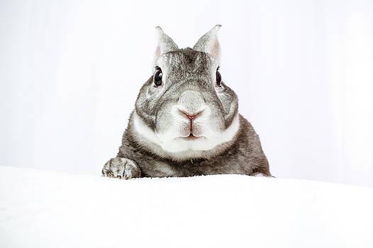 Peeking Bunny by Jeanette Fellows