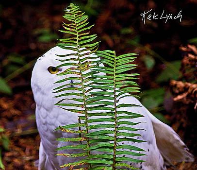 Kate Lynch - Peeking