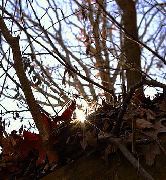 Peeking Sun by J Austin