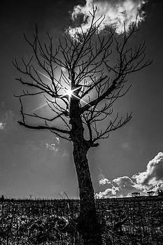 Peeking Sun by Jonathan Grim