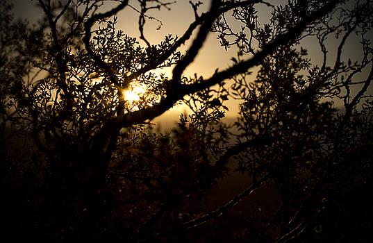 Peeking Sun by Mike Hill