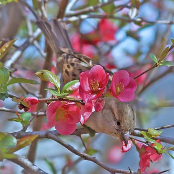 Peeking Through the Spring Flowers by Deb Henman