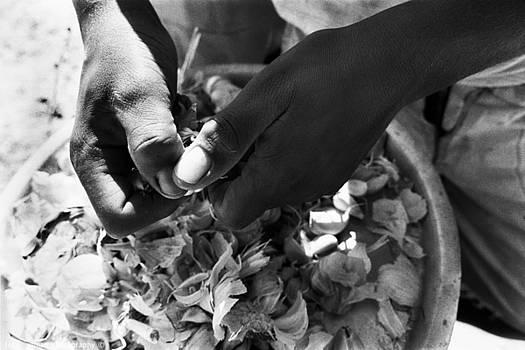 Isaac Silman - peeling garlic Sinai Egypt