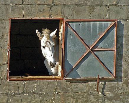 Mary Attard - Peeping horse