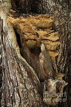 Peeping through woods by Kiran Joshi