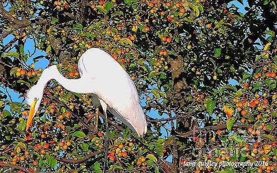 Tami Quigley - Peering Atop The Apple Tree