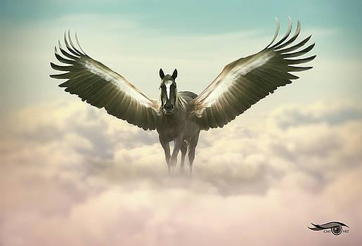 Pegasus II  by Cmi Art