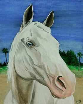 Pegasus by M Gilroy
