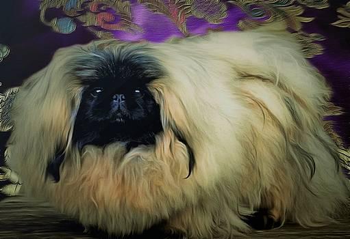 Pekingese  by Janice MacLellan