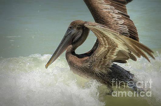 Pelican 4606ea by Debra Kewley