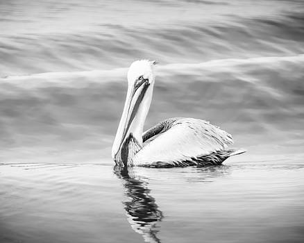 Pelican Adrift by Michael McStamp