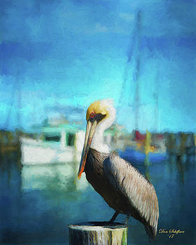 Pelican and Boats by Don Schiffner