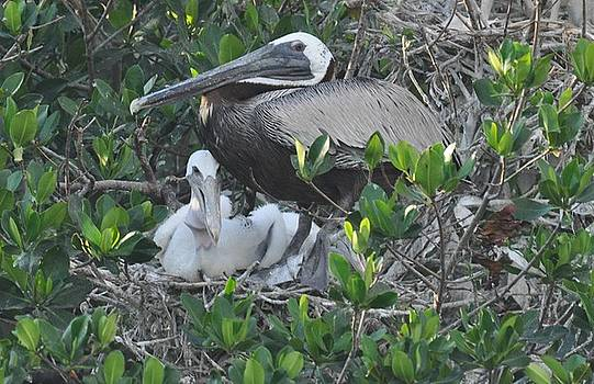 Pelican and chic by Cristina Denegre