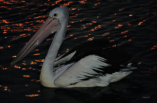 Pelican at night by Cheryl Hall