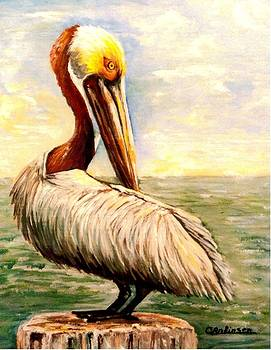 Pelican at rest by Carol Allen Anfinsen