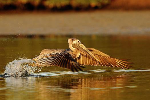Pelican blastoff by George DeCamp