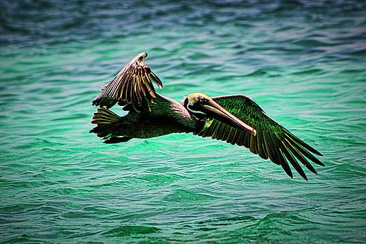 Pelican Brief by Todd Dunham