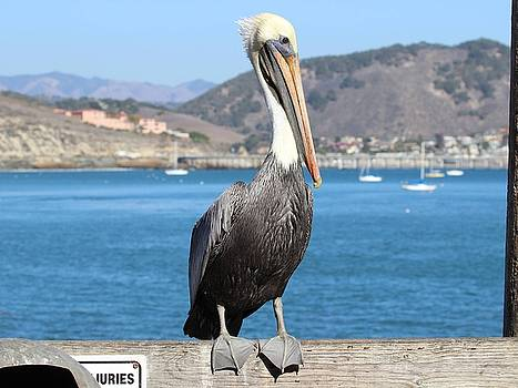 Gary Canant - Pelican by Fish Cleaning Station