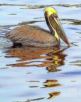 Pelican by David Lane