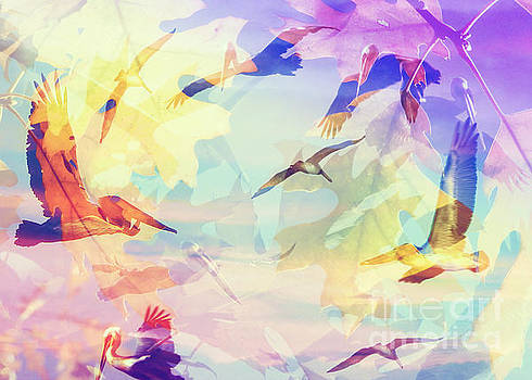 Pelican Dreams by Robert Ball