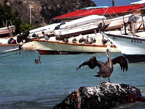 Bibi Rojas - Pelican drying wings