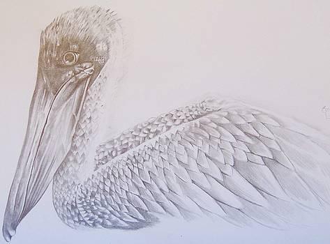 Pelican by Emma Lyon