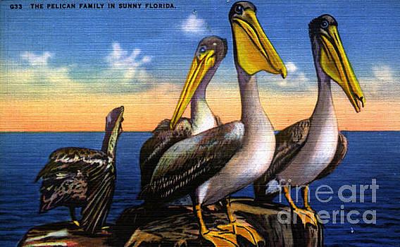 Pelican family  Vintage Postcard by Jennifer Capo