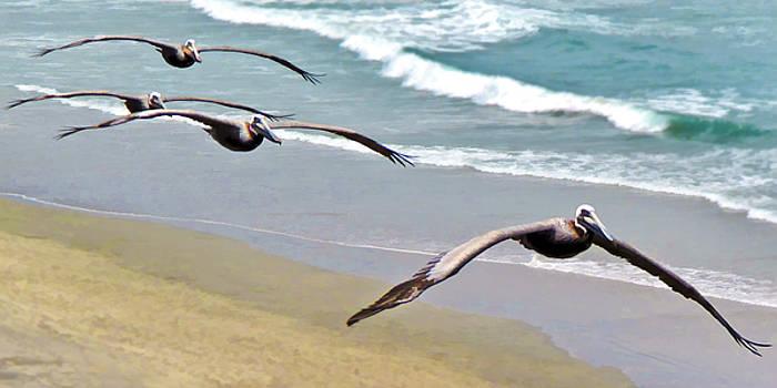 Pelican Fly-by by L J Oakes