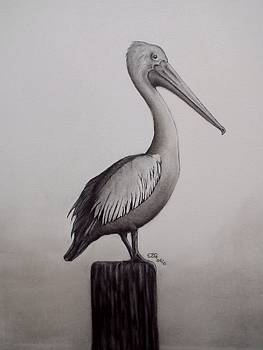 Pelican by Gilbert Photography And Art