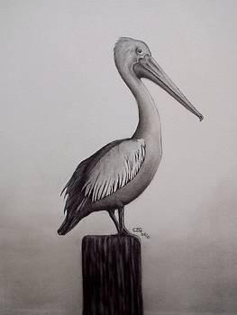 Gilbert Photography And Art - Pelican
