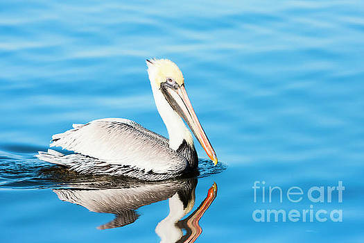 Pelican in Blue Waters by Michael McStamp