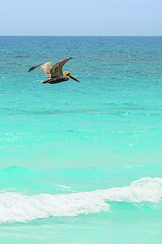 Lisa Lemmons-Powers - Pelican in Cancun