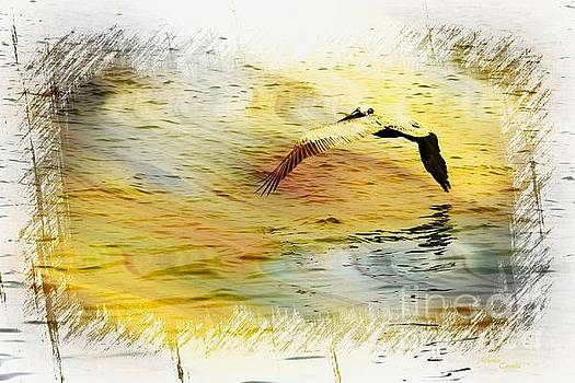 Pelican In Flight by Athala Carole Bruckner
