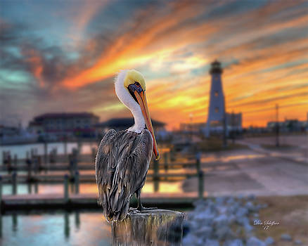 Pelican in Gulfport Harbor by Don Schiffner