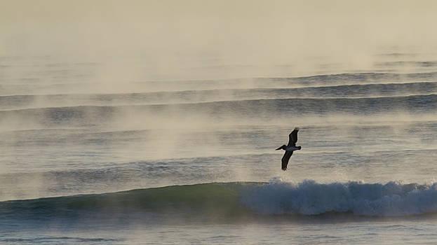 Paul Rebmann - Pelican in Sea Smoke